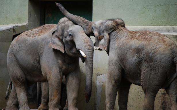 _elephant_love