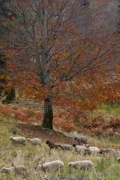 autumn_in_romania_10