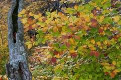 autumn_in_romania_14
