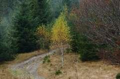 autumn_in_romania_3