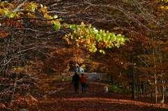 autumn_in_romania_34