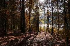 autumn_in_romania_35