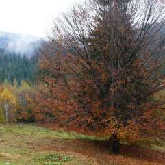 autumn_in_romania_4
