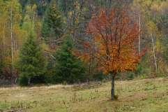 autumn_in_romania_7